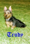 Trudy-The-Terrier Avatar